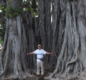 ガジュマルの大樹(ハワイ)